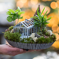 Design by Terrain: Living Landscape Gifts