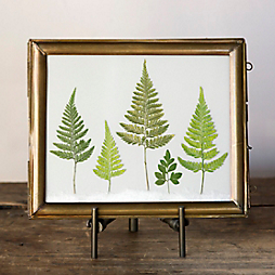 A Plant Press Keepsake