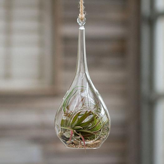 Drop Glass Tillandsia Kit