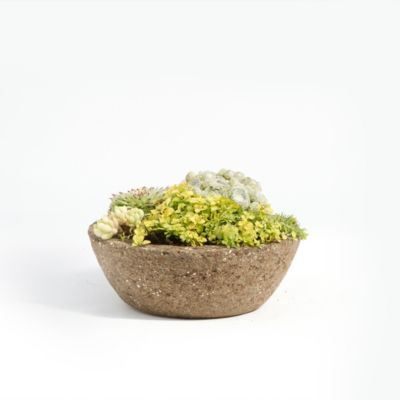 Low Profile Hypertufa Planter, No. 1