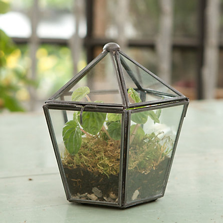 Gas Light Terrarium