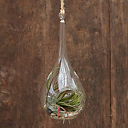 Drop Glass Terrarium