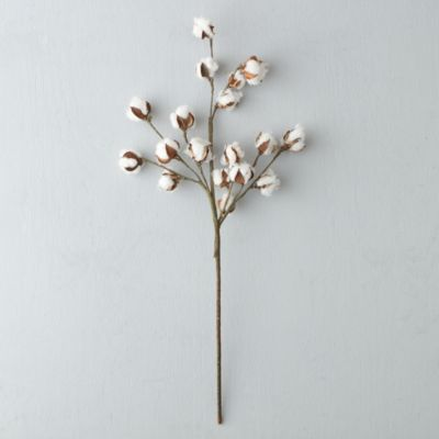 Dried Cotton Stem