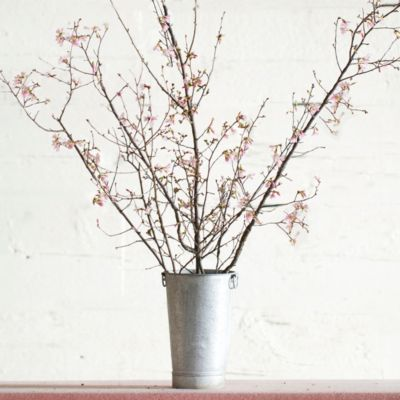 Seasonal Pink Blossom Branches