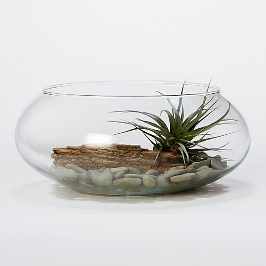 Low Profile Terrarium