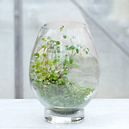 Open Drop Terrarium