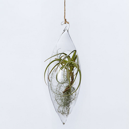Elongated Drop Terrarium