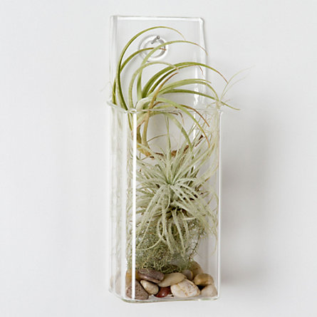 Tillandsia Pocket Square