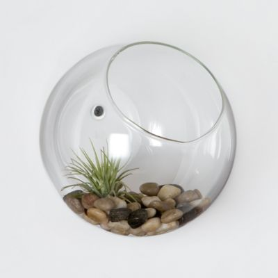 Wall Bubble Terrarium
