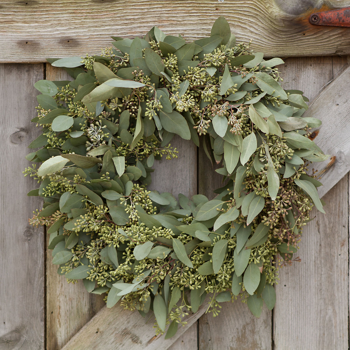 Seeded Eucalyptus Wreath | Terrain