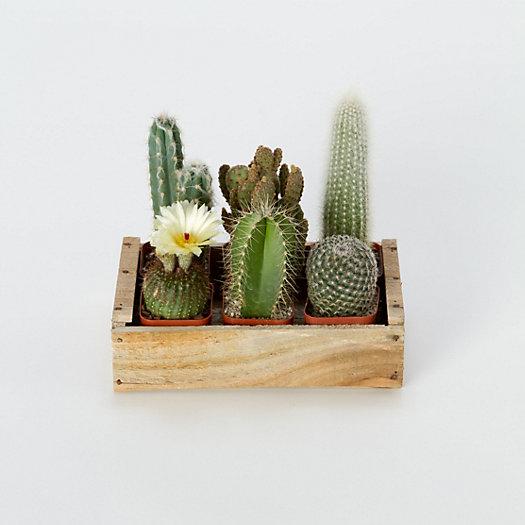 Terrain Home Decor: Terrarium Cactus Garden