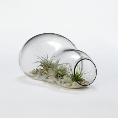 Twice Bubbled Terrarium