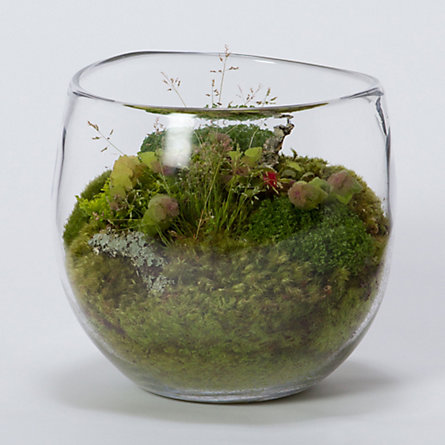 Simon Pearce Headwater Terrarium