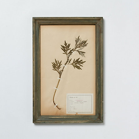 Framed Floral Study, No. 2