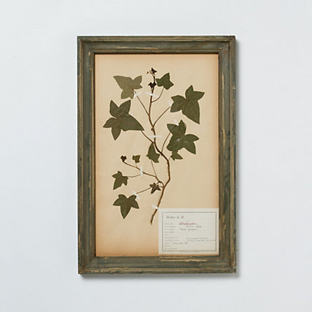 Framed Floral Study, No. 4