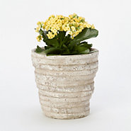Layers Pot