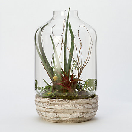 Weathered Basin Terrarium