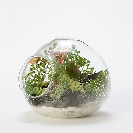 Sea Foam Terrarium