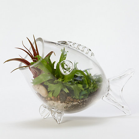 Reef Fish Terrarium