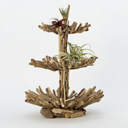 Twisted Driftwood Epergne