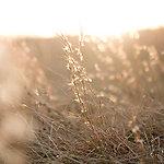 Autumn Terrariums