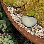 Saturday in the Garden: Shade Gardens