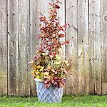 Fall Transition Gardening