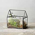 Kid's Back to School Terrariums