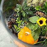 Kid's Autumn Terrariums