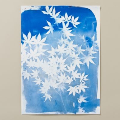 Japanese Maple Cyanotype