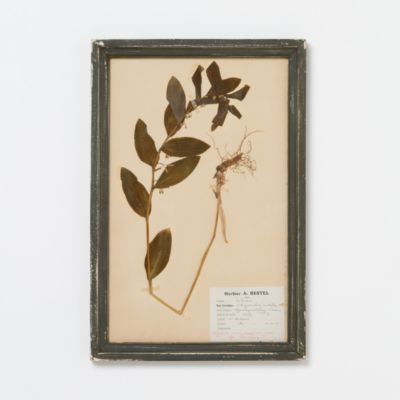 Vintage French Herbarium