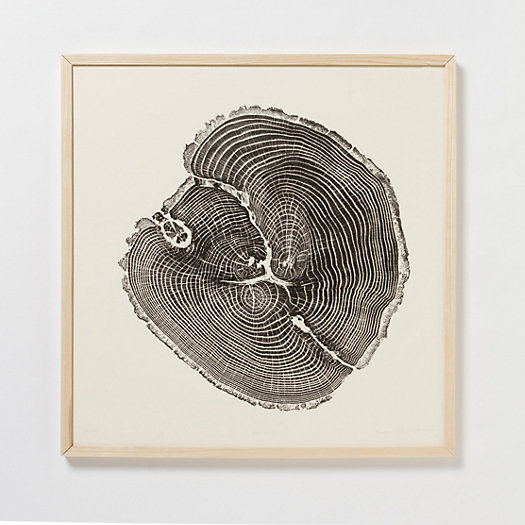 Black Oak Woodcut Print