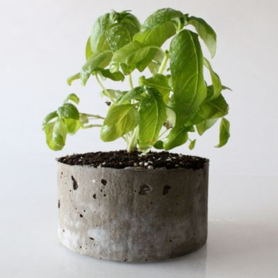 Cast Stone Planter, Basil