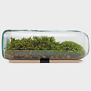 Terrarium Bottle, Moss