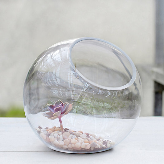 Open Bubble Terrarium