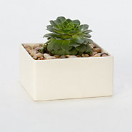 Ceramic Square Planter