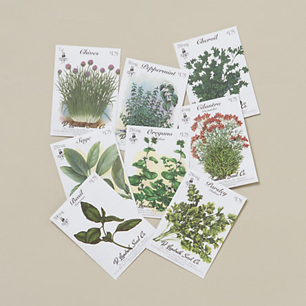 Kitchen Herbs Seed Collection