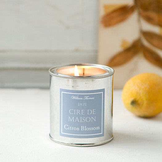 Painter's Candle, Citron Blossom