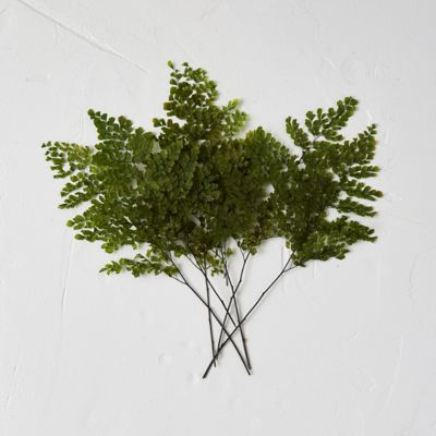 Preserved Adiantum Fern Bunch, Large