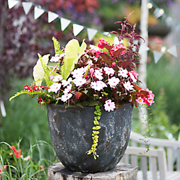 #terraindigs July 4th in the Garden