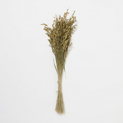 Dried Sea Oat Grass