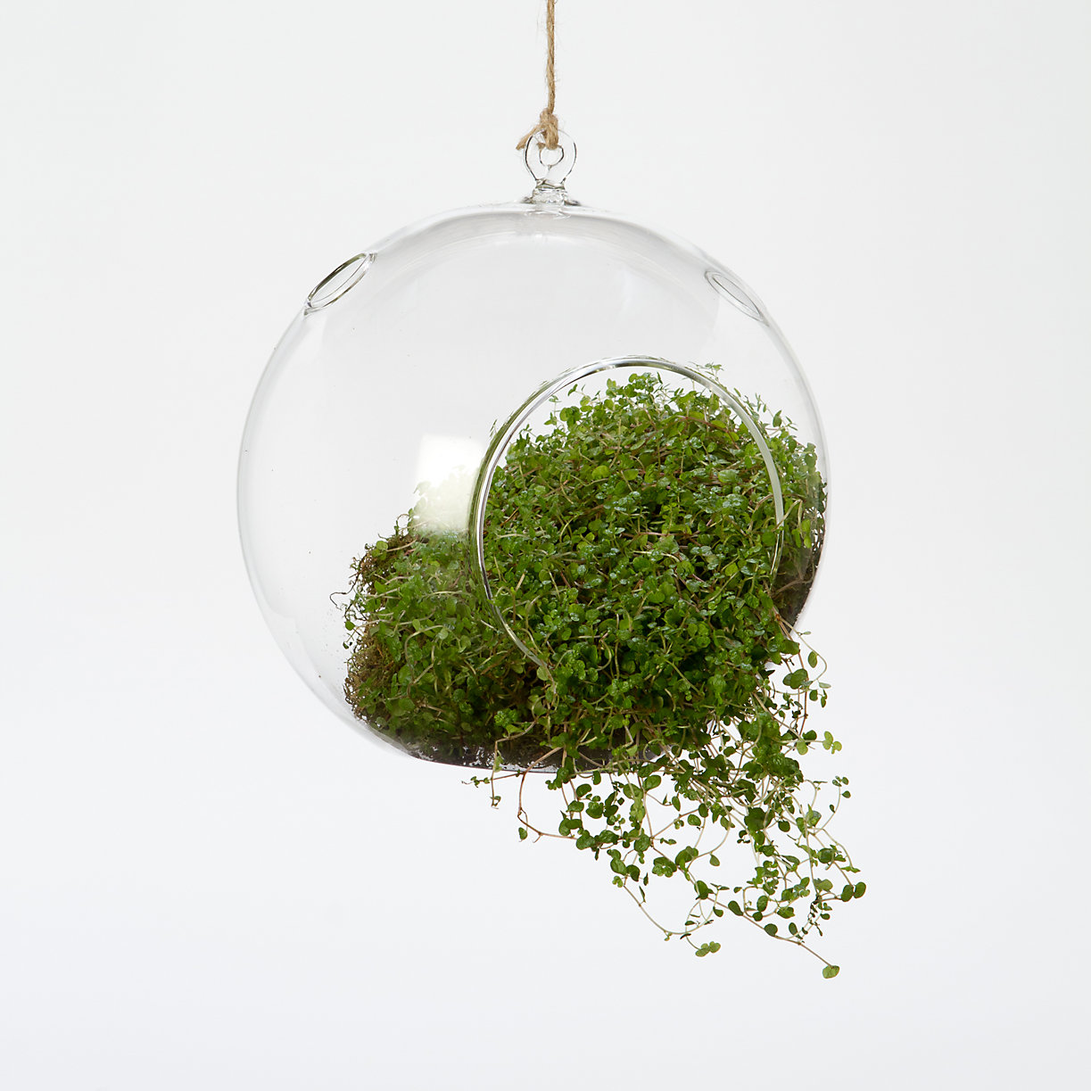 Hanging Bubble Terrarium Terrain : 28527240100azoom2 from www.shopterrain.com size 1223 x 1223 jpeg 189kB
