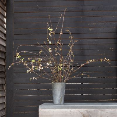 White Prunus Bunch