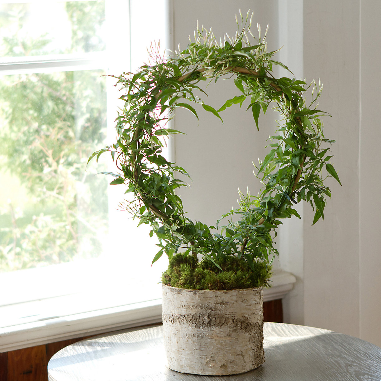 28681864 000 a zoom2 for Indoor plant gift ideas