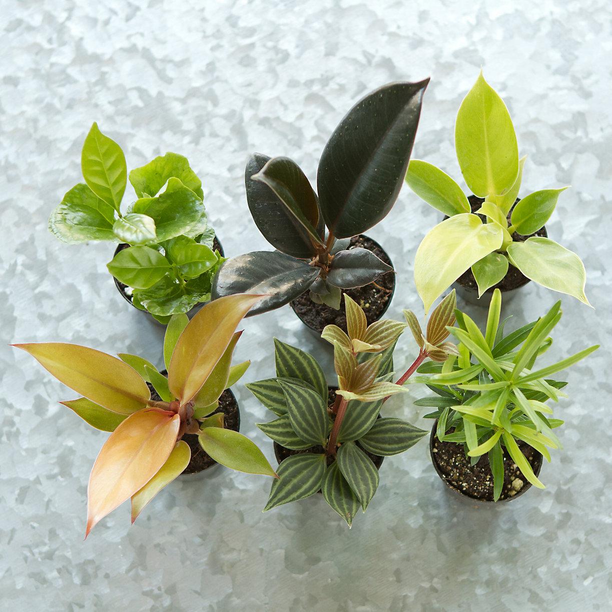 Terrarium Plant Collection Tall Terrain