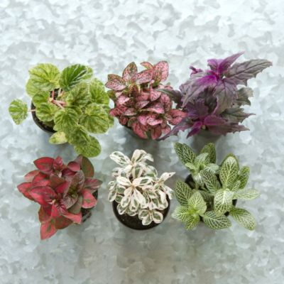 Terrarium Plant Collection, Low