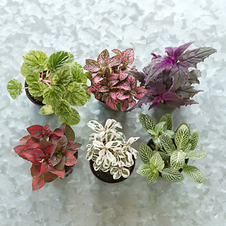 Terrarium Plant Collection Low In Garden Plants Moss At