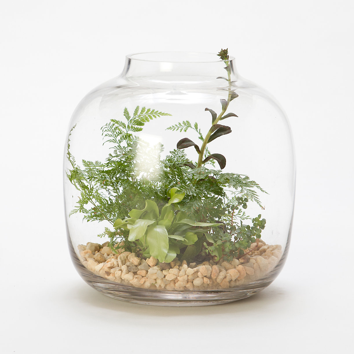 Water Jar Terrarium Terrain