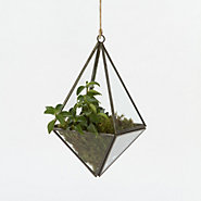 Hanging Diamond Terrarium