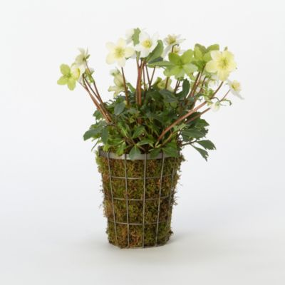 Tapered Wire Pot, Medium